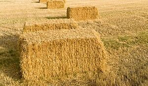 wheat straw, wheat straw round bales. wheat straw square bales
